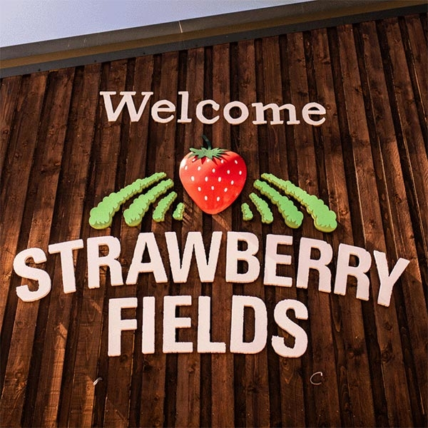 Strawberry Fields Wordpress Website Design Featured Image