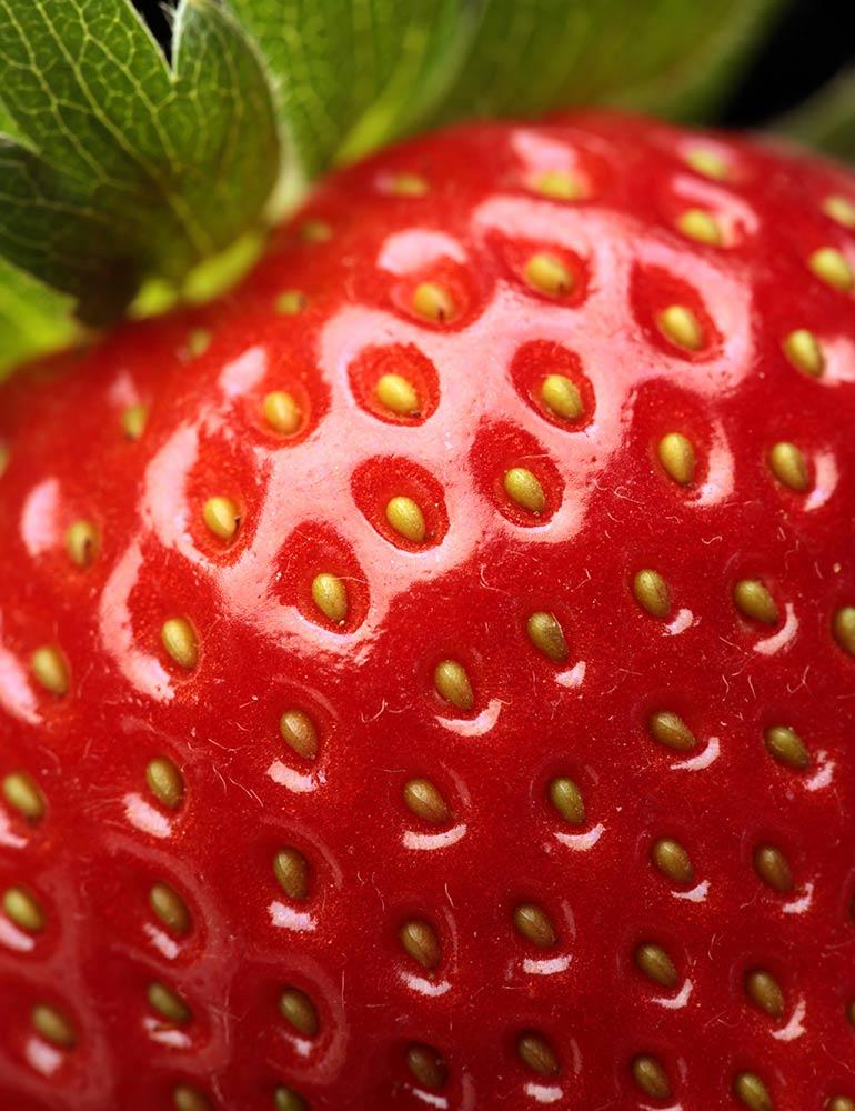 Strawberry Fields Wordpress Website Design